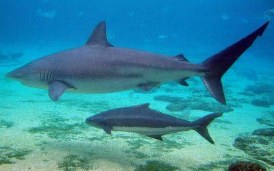 Izraelben cápák úszkáltak a fürdőzőkkel egy strandon