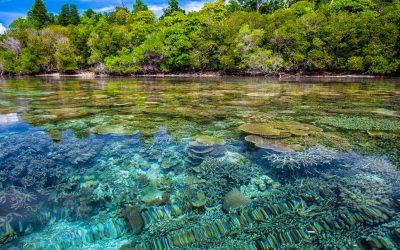 Korall atlasz: Elindult a világ első műholdas korallzátony-figyelő rendszere