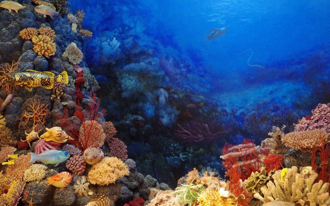 Több oka van, hogy felére csökkent a világ korallzátonnyal borított területe
